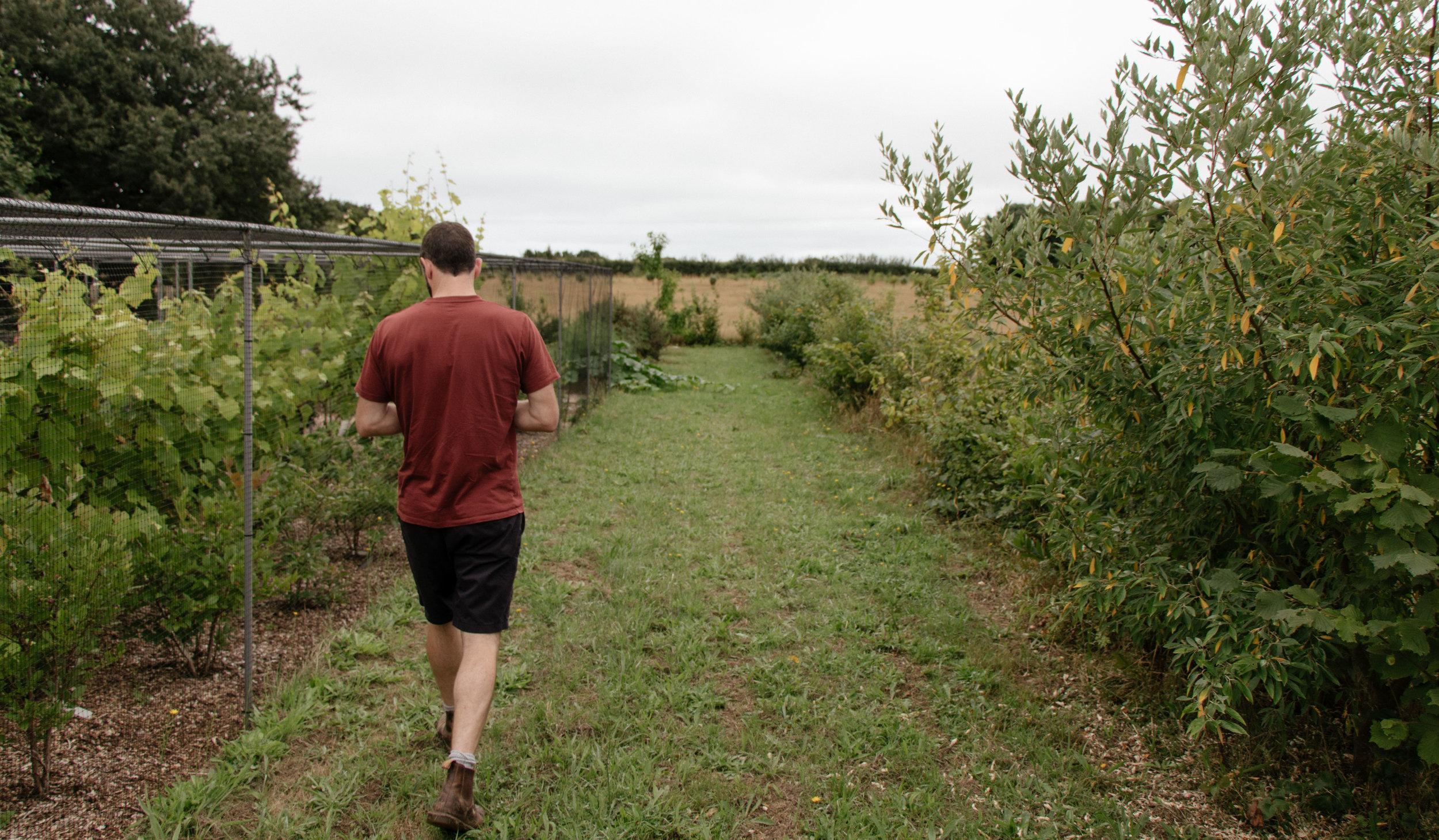 Fields-in-Fields_ARGAL-HOME-FARM-James-garden_5.jpg