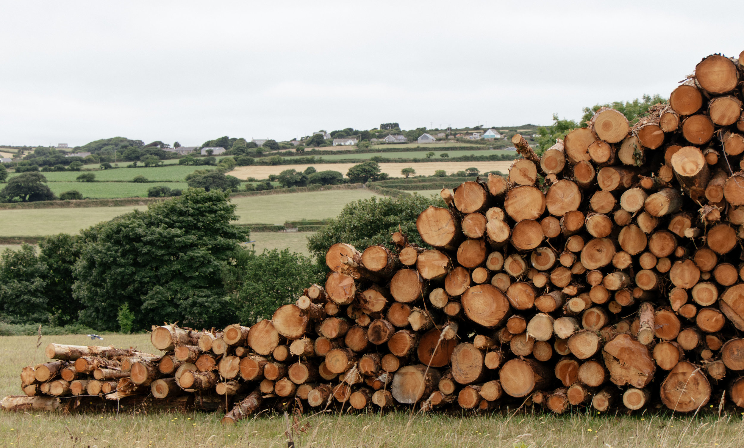 Large stack of logs ready for the biomass boiler lie on a field at Argal Home Farm, with farmland and hedges in the background.