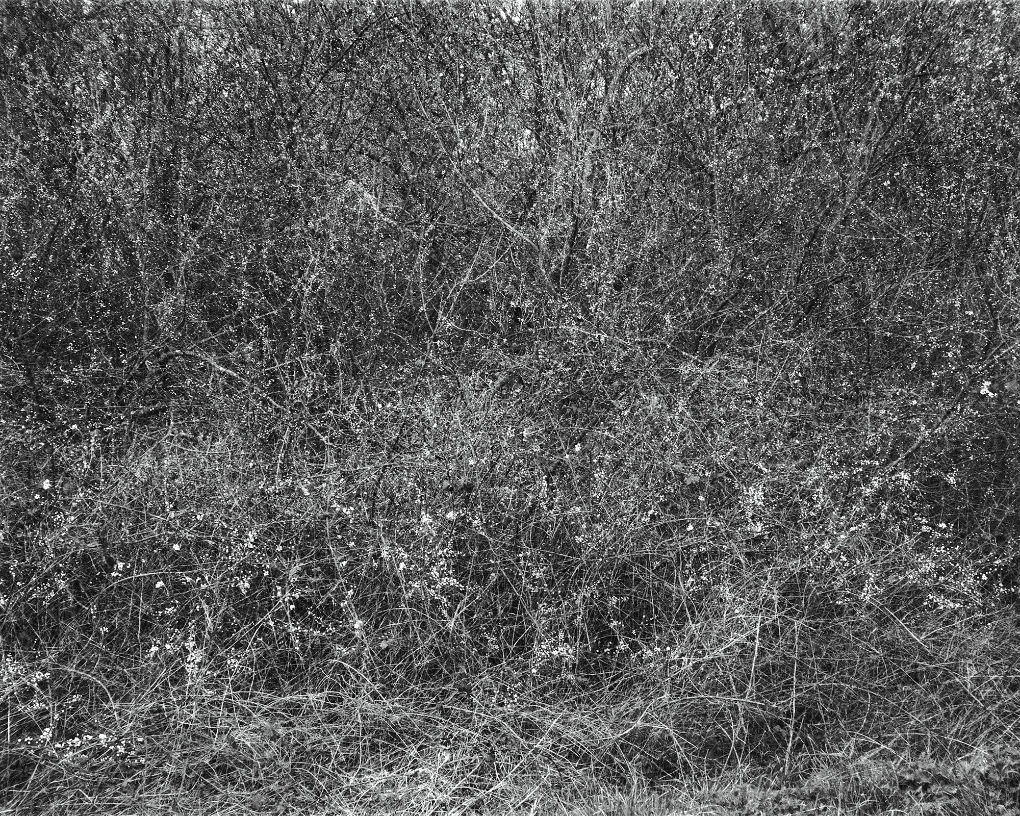 Photograph: Jonty Sale, 'SEMBLANCE #999'