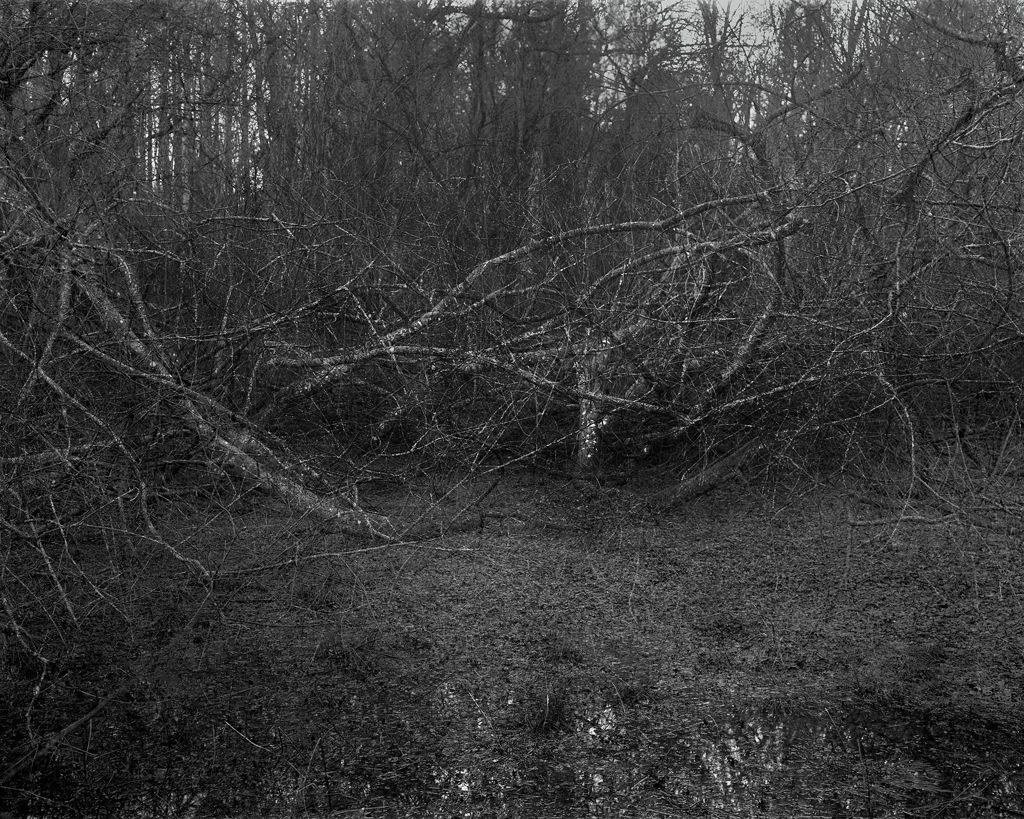 Photograph: Jonty Sale, 'SQUALLSMIRE #2' (2014)