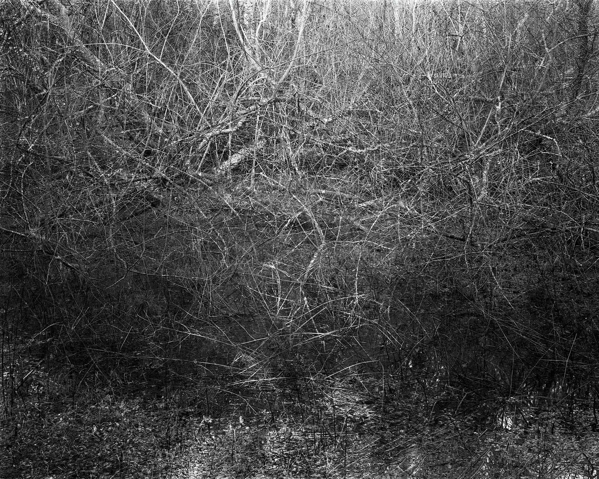 Photograph: Jonty Sale, 'SQUALLSMIRE #6'