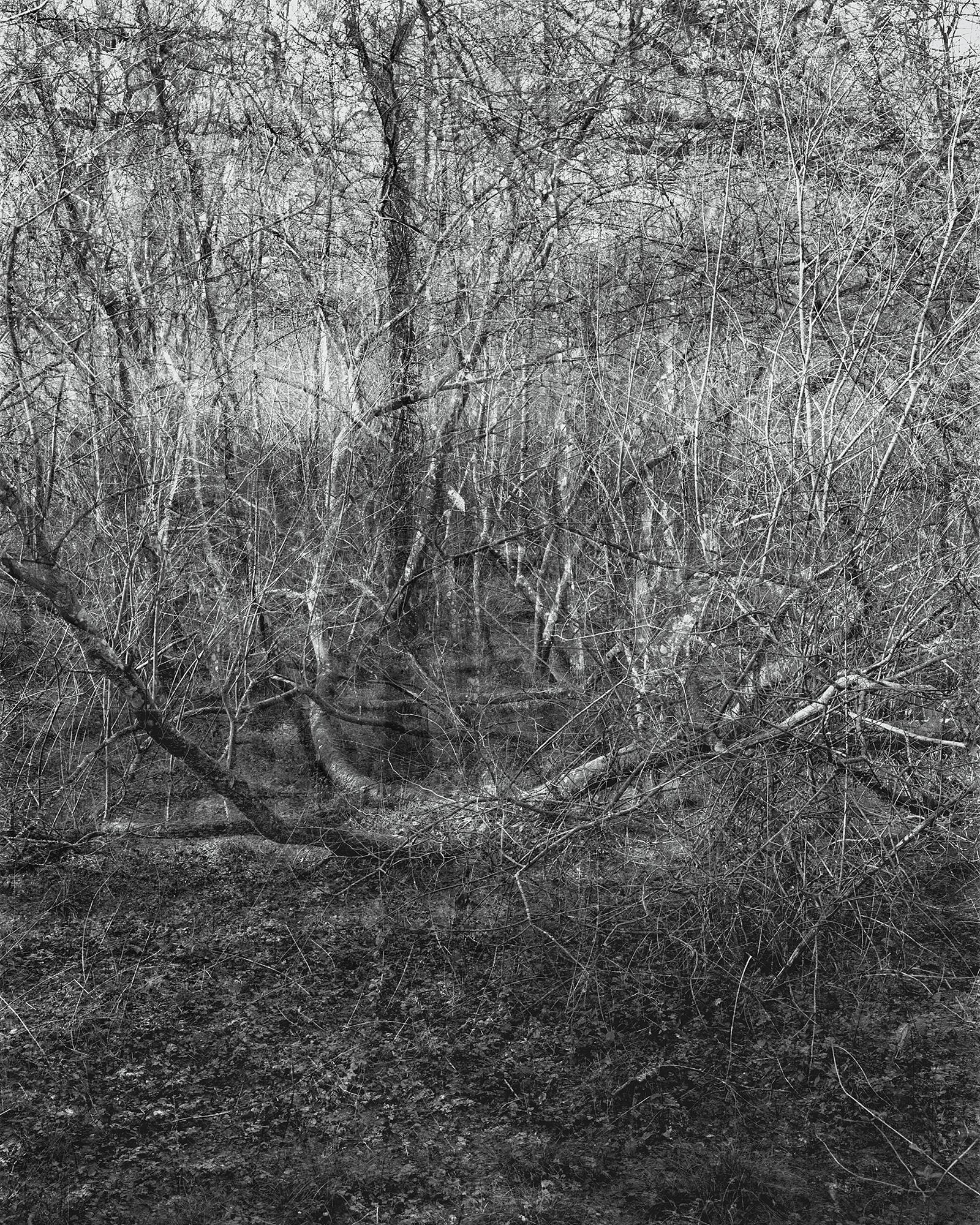 Photograph: Jonty Sale, 'SQUALLSMIRE #9'