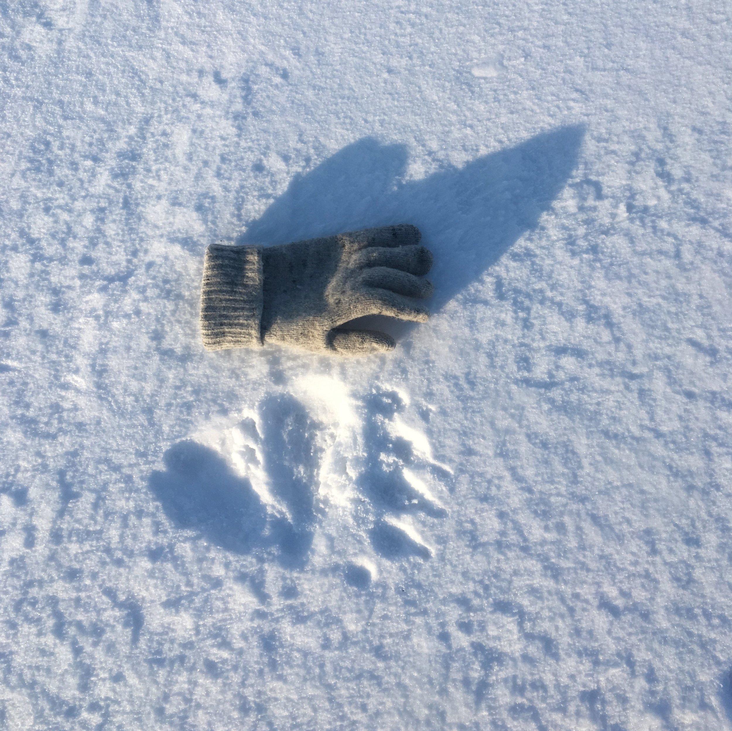Polar bear print and wool glove on frozen Billefjorden, Svalbard, 2018. Photograph: Dan Richards