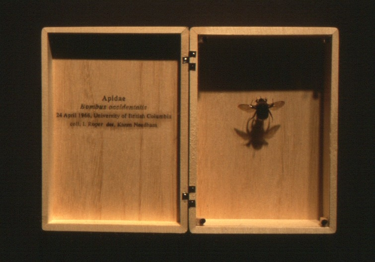 K-16-Wall Specimens.jpg