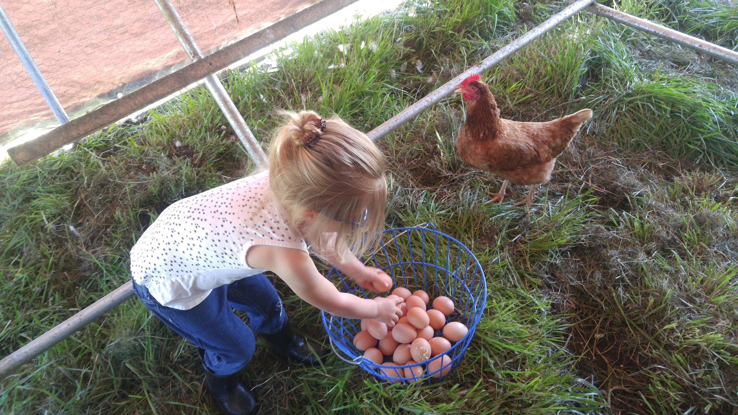 Our daughter Fallon collecting eggs.