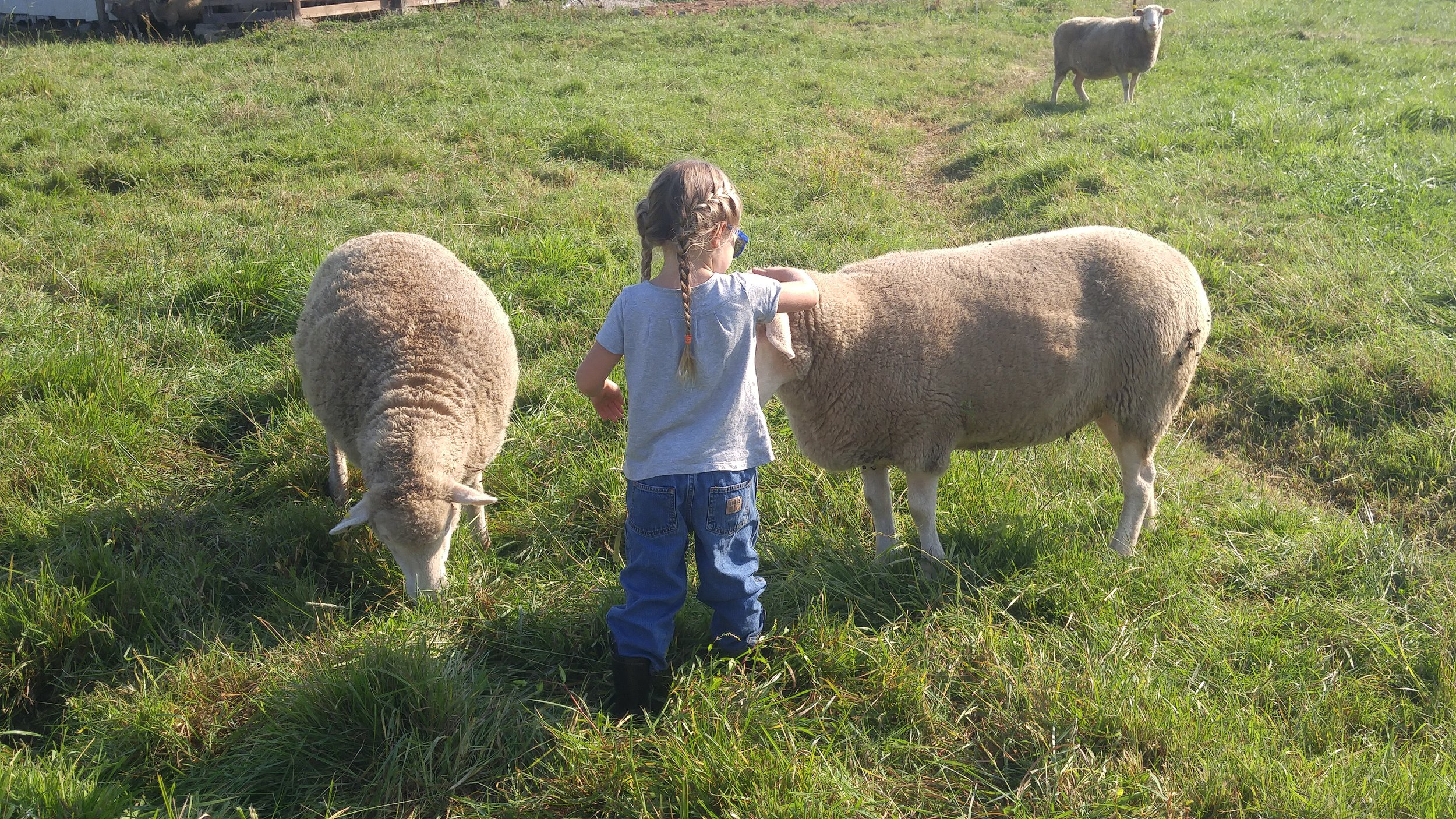 Our daughter petting one of our sweet ewes.
