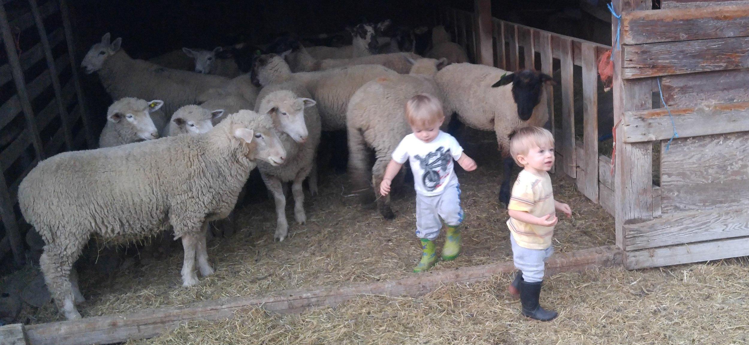 boys with sheep 2.jpg