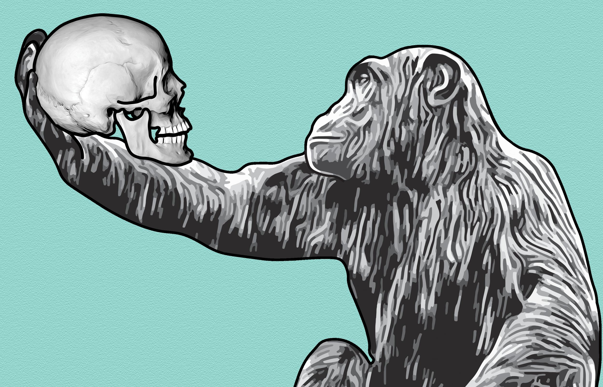 bonoboskull .png