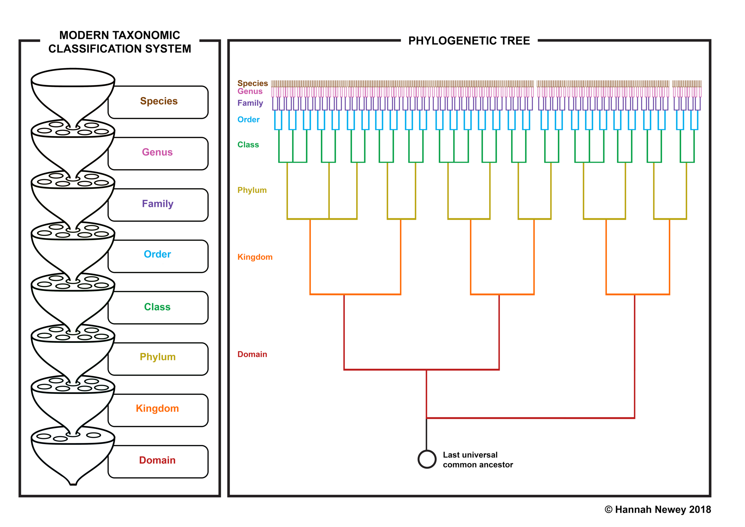 TAXONOMY AND TREE.png