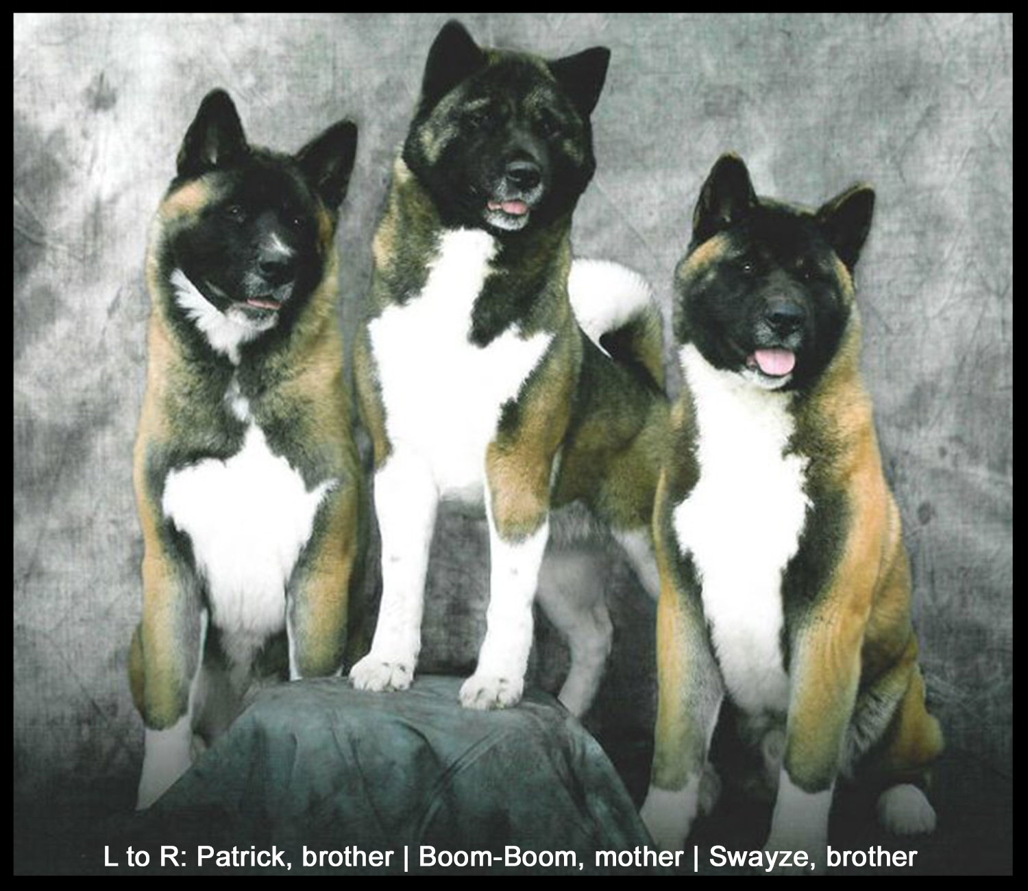 L to R: Patrick , brother |  Boom-Boom , mother |  Swayze , brother