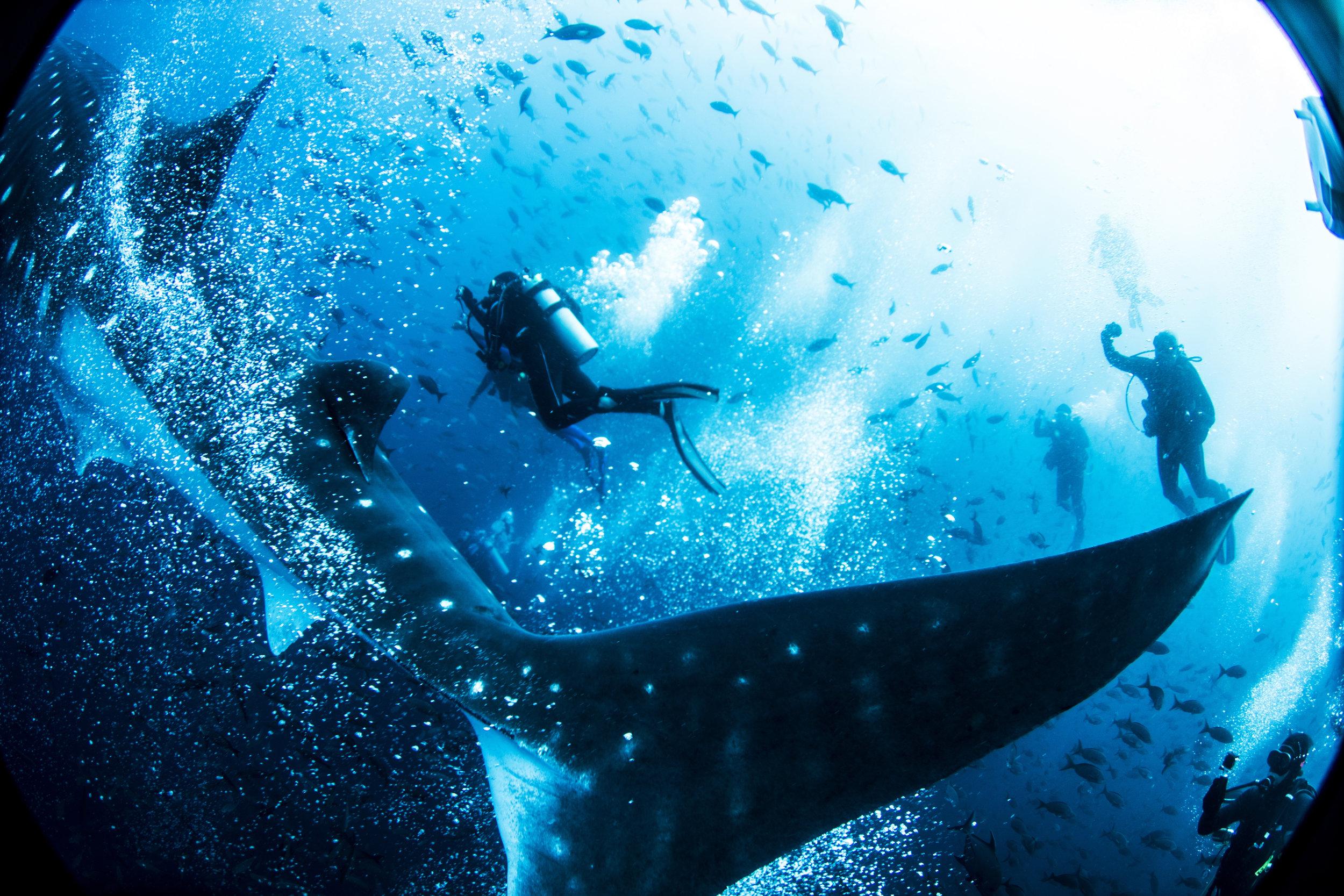 Exploring the deeps in a memorable way.