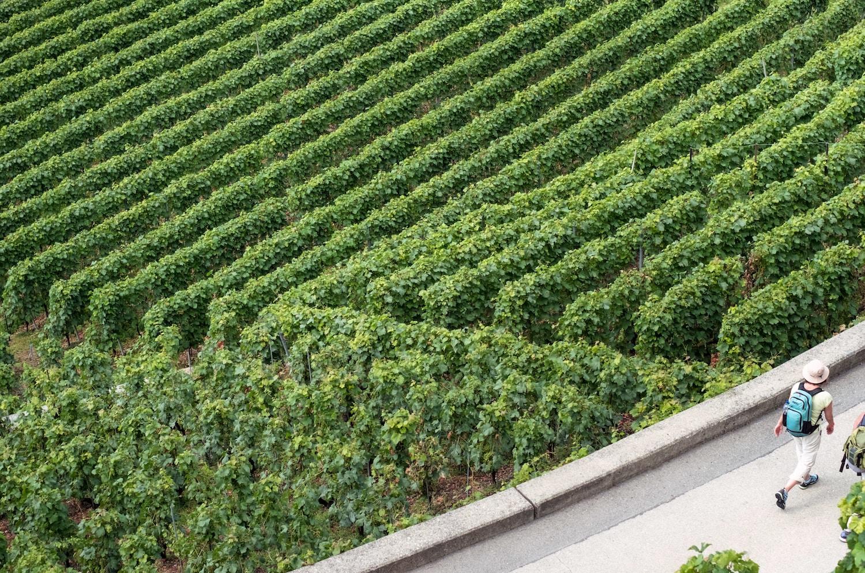 Wine Processors