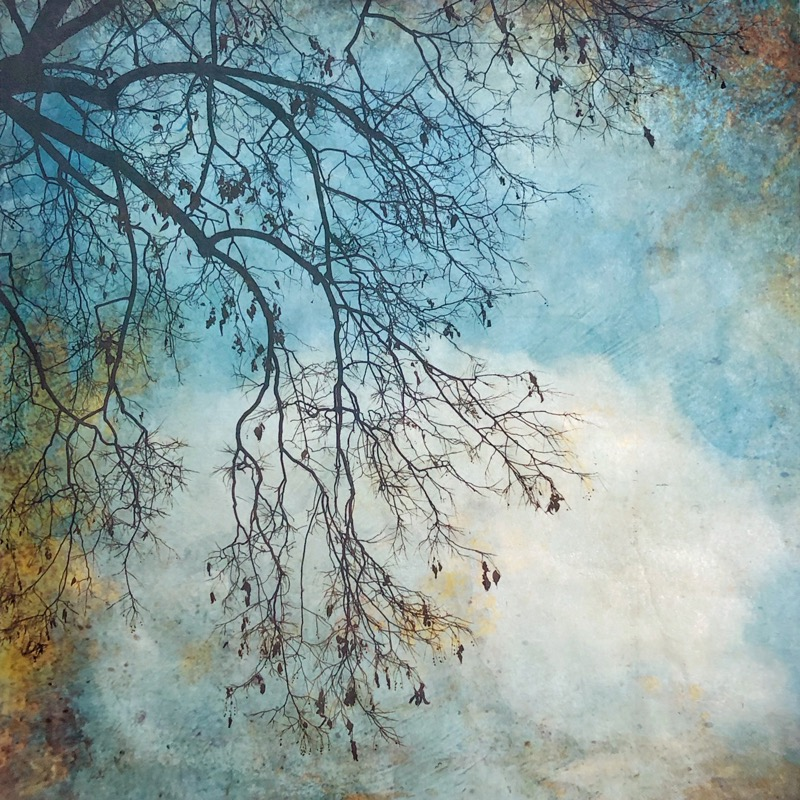 """""""The Truth of Winter Branches"""""""