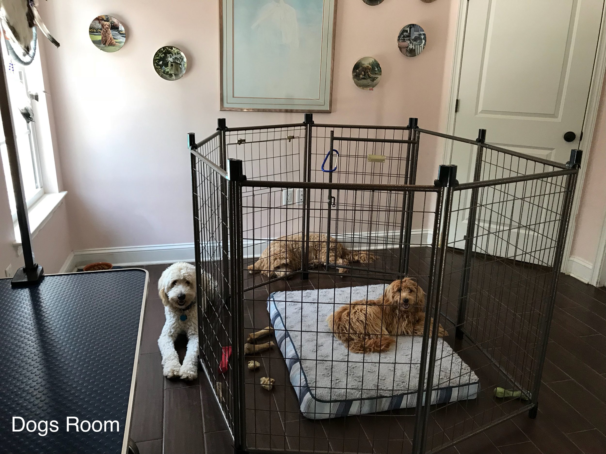 The Dog's Room