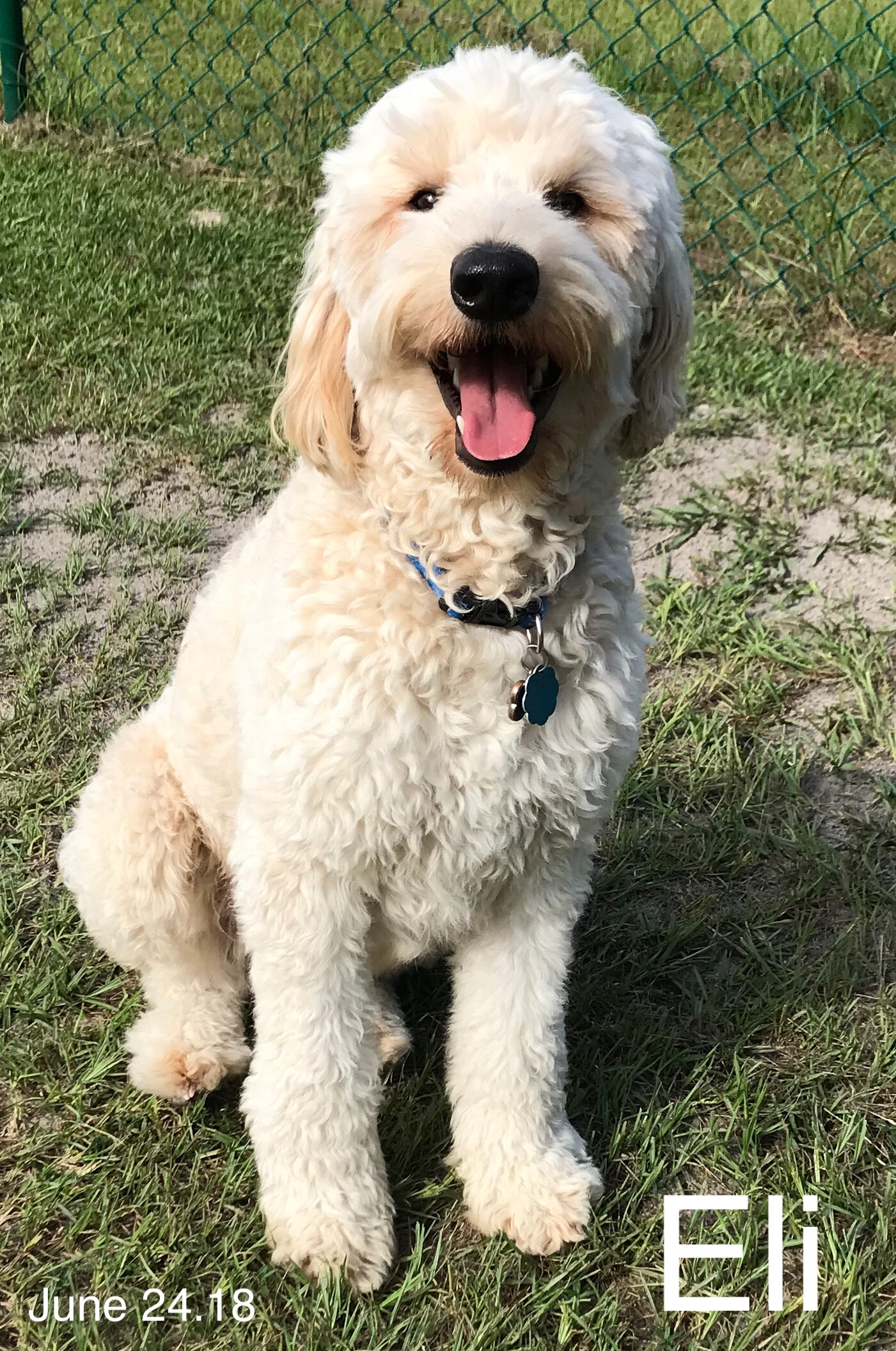 Twin Flames Farm Goldendoodle Breeder