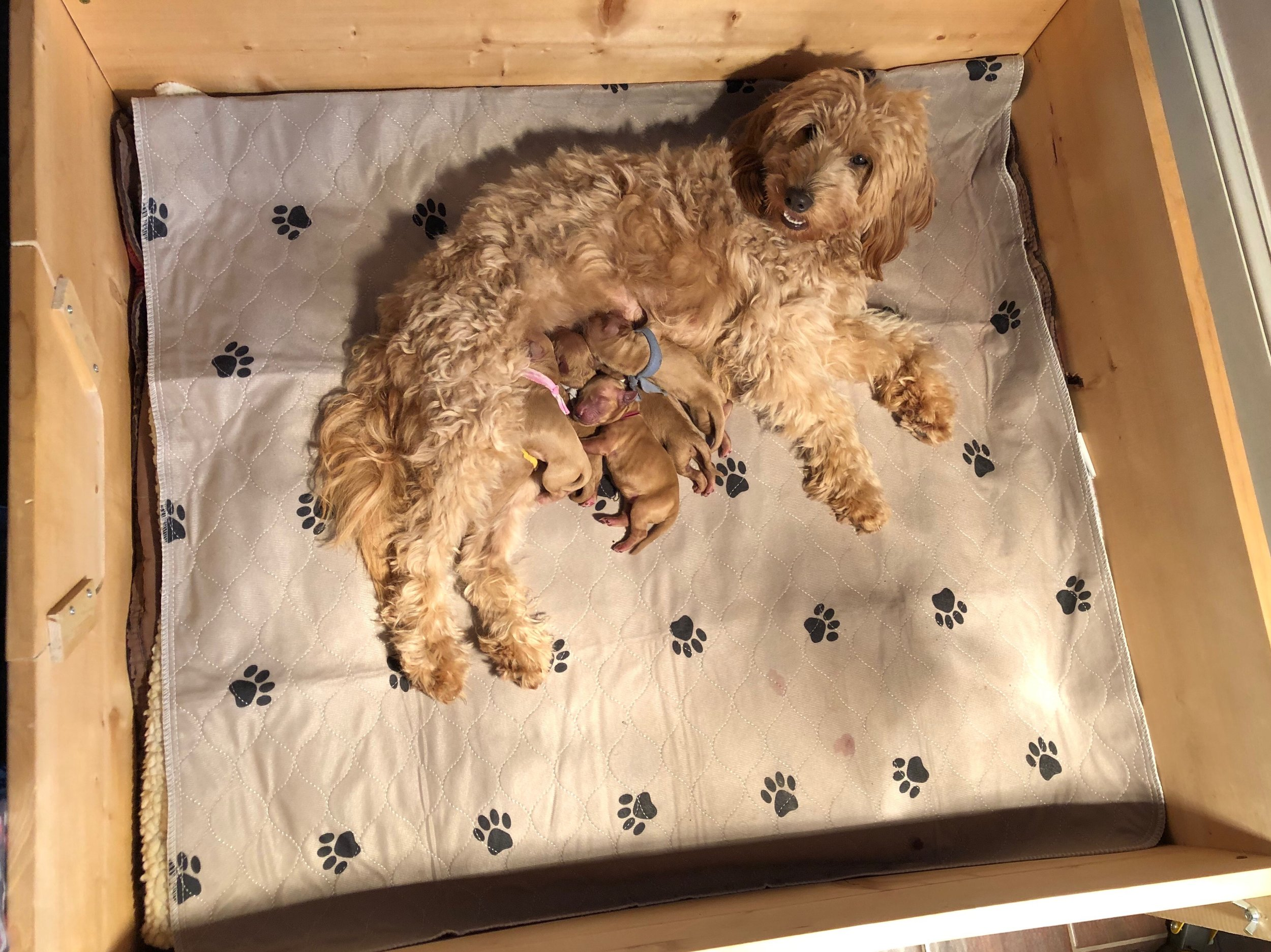 Patchy and Puppies: 1 Day Old - Feb 1
