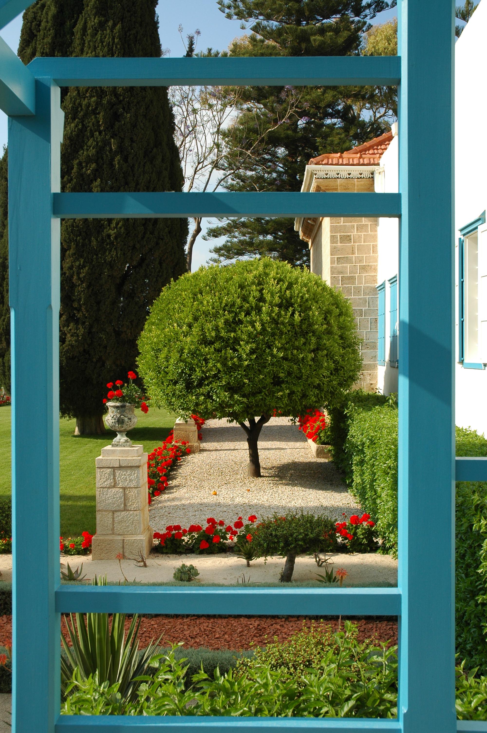 Tree in the garden near the Shrine of Bahá'u'lláh