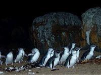 penguins2.jpg