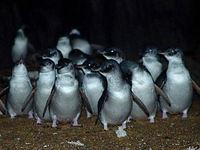 penguins3.jpg