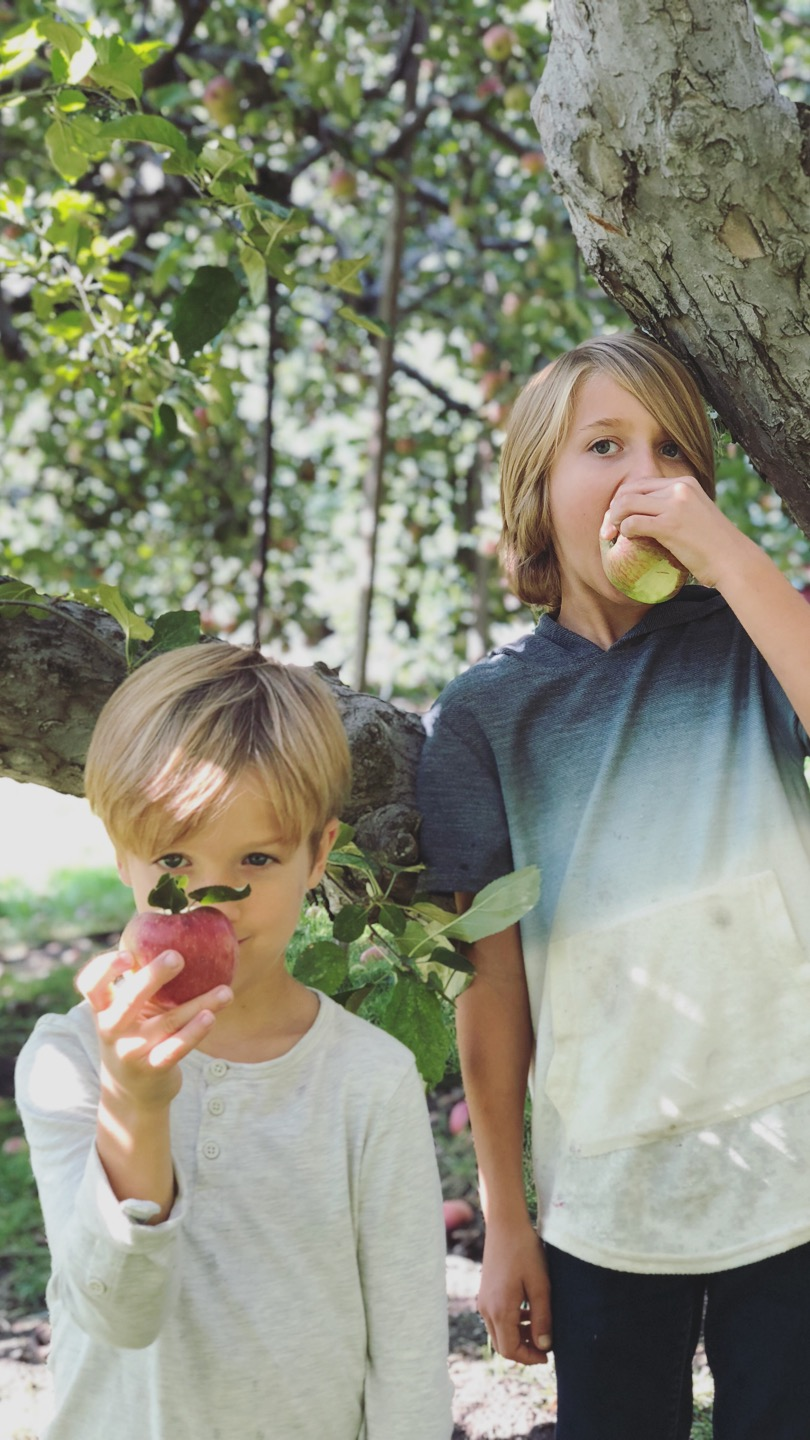 boys apple picking.JPG