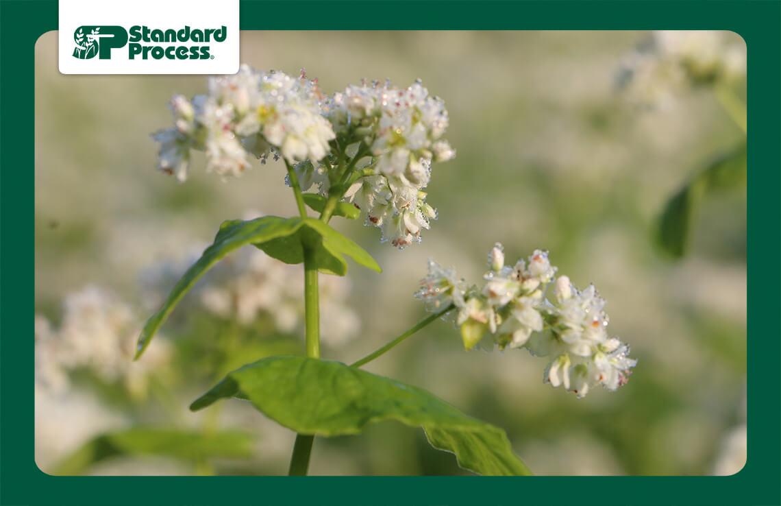 Macro-White-Flower.jpg