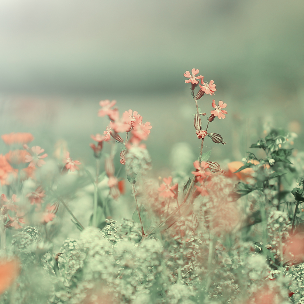 blomma.jpg