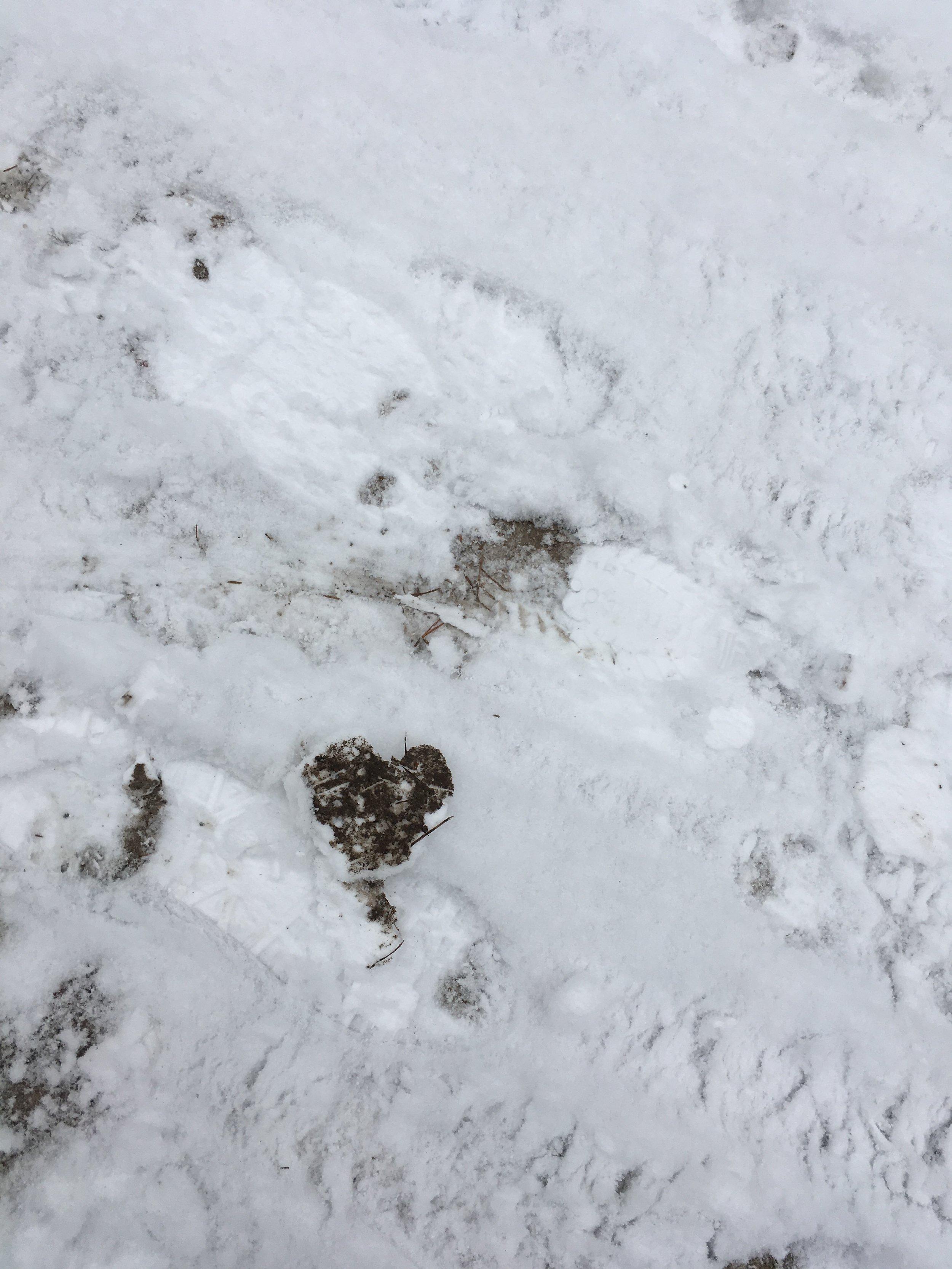 hjärta 4.JPG