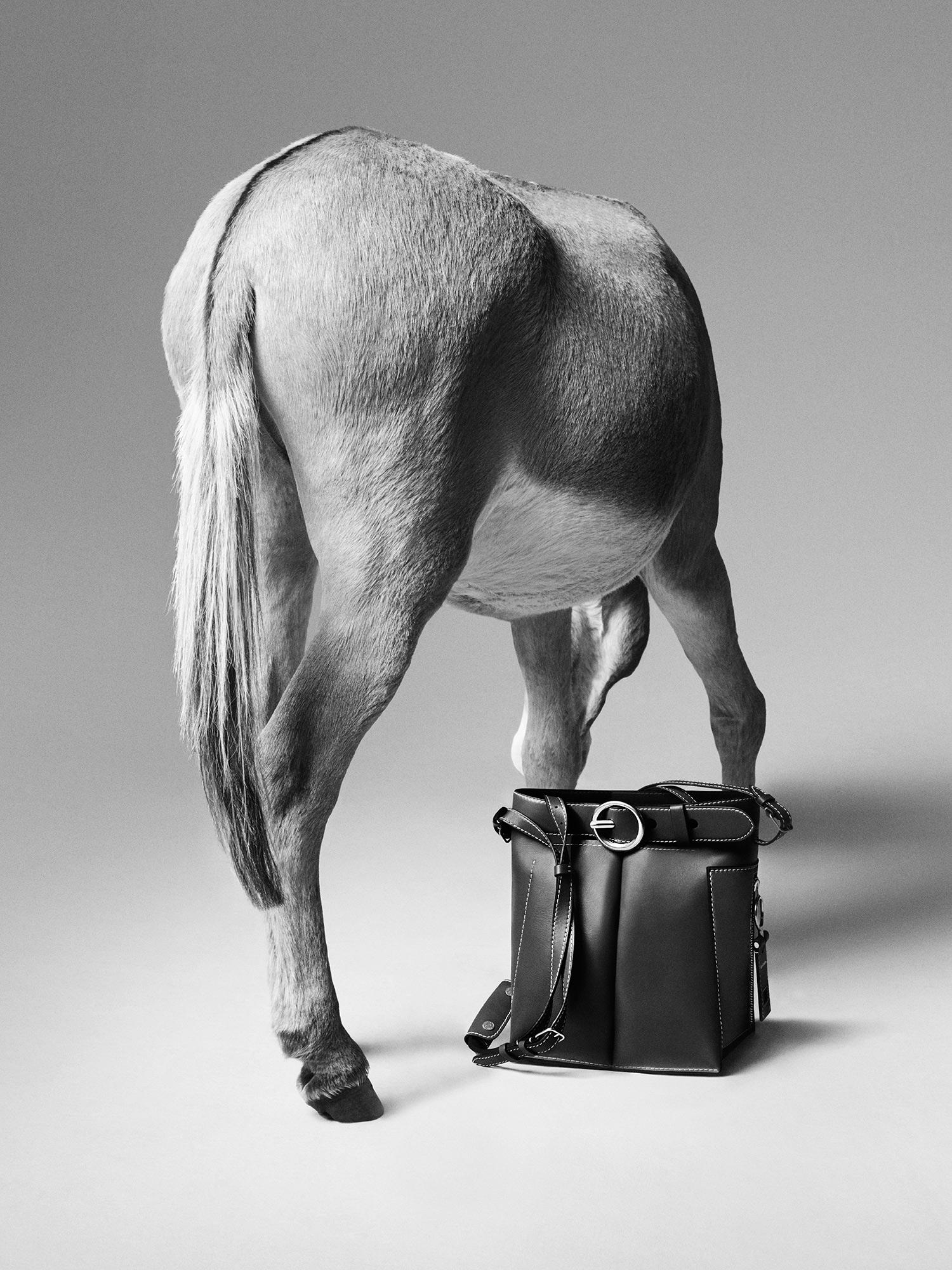 acne,-donkey3.jpg