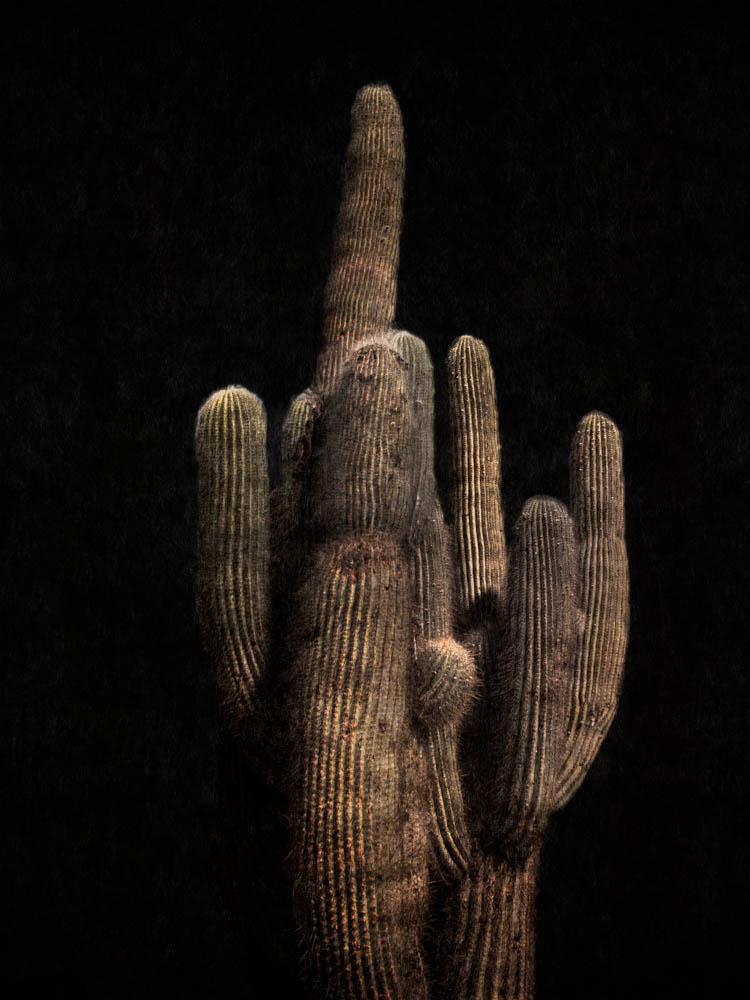 Skarp+Agent,+Cooper+&+Gorfer,+Cactus.jpg