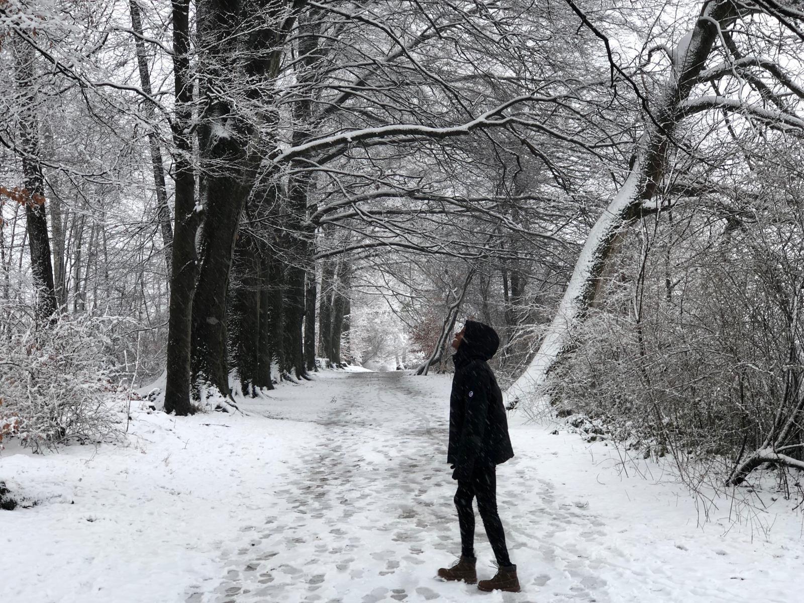 Hileni Snowforest.jpg