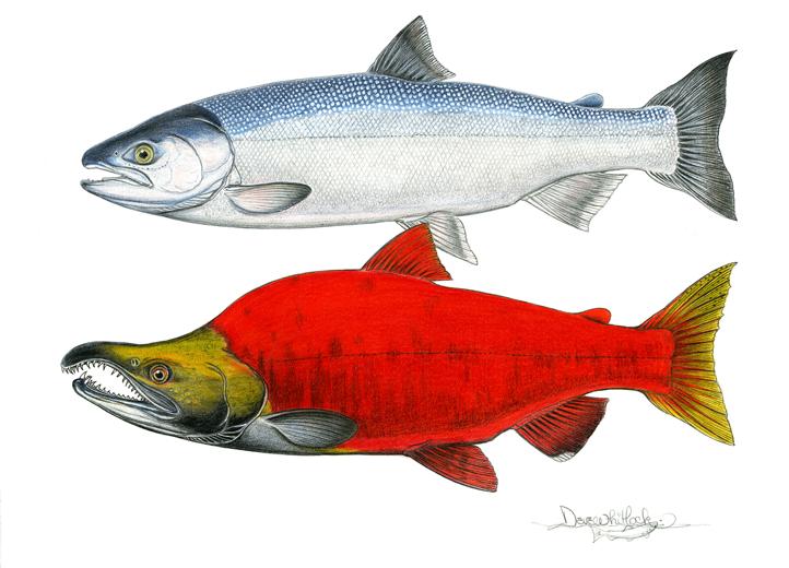 Changing Fish.png