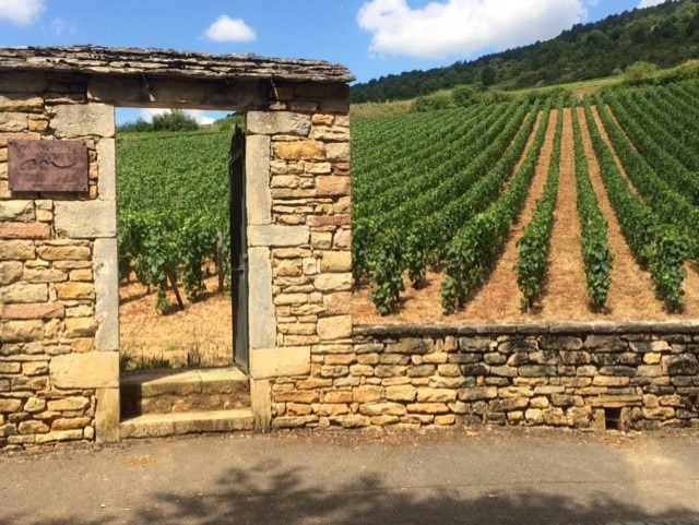 vineyard-perspective-wine-confidante.jpg