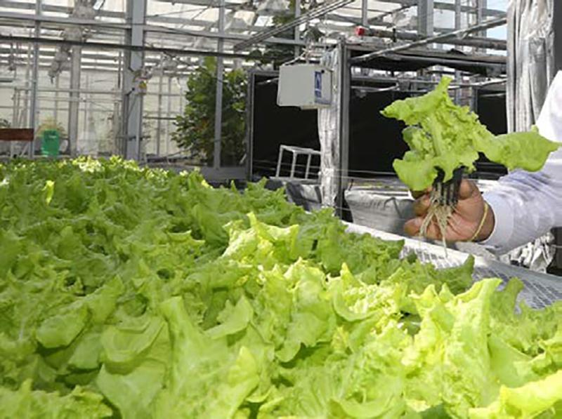 purdue-greenhouse-and-indoor-hydroponics-workshop.jpg