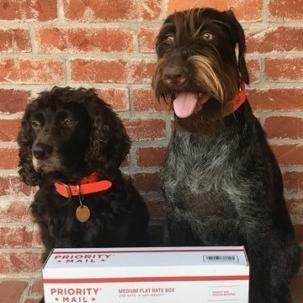 Tally-Ho-and-Finnie-mae-ship-dog-beds-to-susies-hope-e1543865663342.jpeg