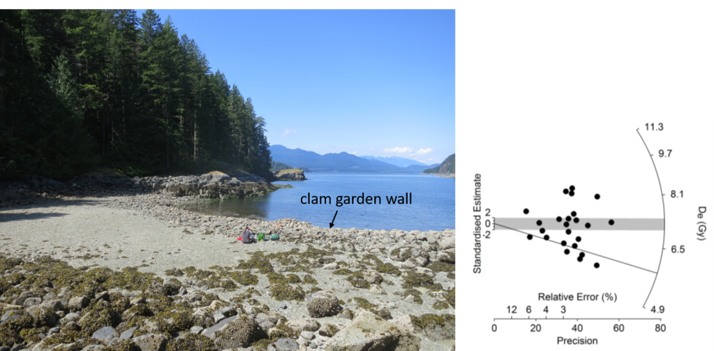 A multi-grain aliquot De distribution from a partially bleached sample collected below an intertidal indigenous clam garden wall on Quadra Island, BC, Canada ( Neudorf et al., 2017 ). Grey shading in the radial plot marks ±2σ of the CAM De value (~5 ka), and the solid line marks the younger MAM De value (~4 ka). Click  here  for an explanation on how to read a radial plot.