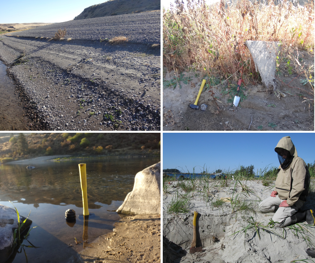 Modern samples should be collected at sites with bleaching conditions thought to be representative of the ancient samples of interest. (TOP LEFT) A modern sandy gravel bar in the Snake River, Idaho. (TOP RIGHT). A vegetated sand bar in the Snake River, Idaho. (BOTTOM LEFT) Shallow-water river sediments adjacent to an archaeological site in Idaho. PHOTO CREDITS: CHRISTINA NEUDORF. (BOTTOM RIGHT) The crest of a sand dune on Calvert Island, British Columbia. PHOTO CREDIT: OLAV LIAN
