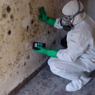 pure-air-solutions-basement-mold-inspection.png