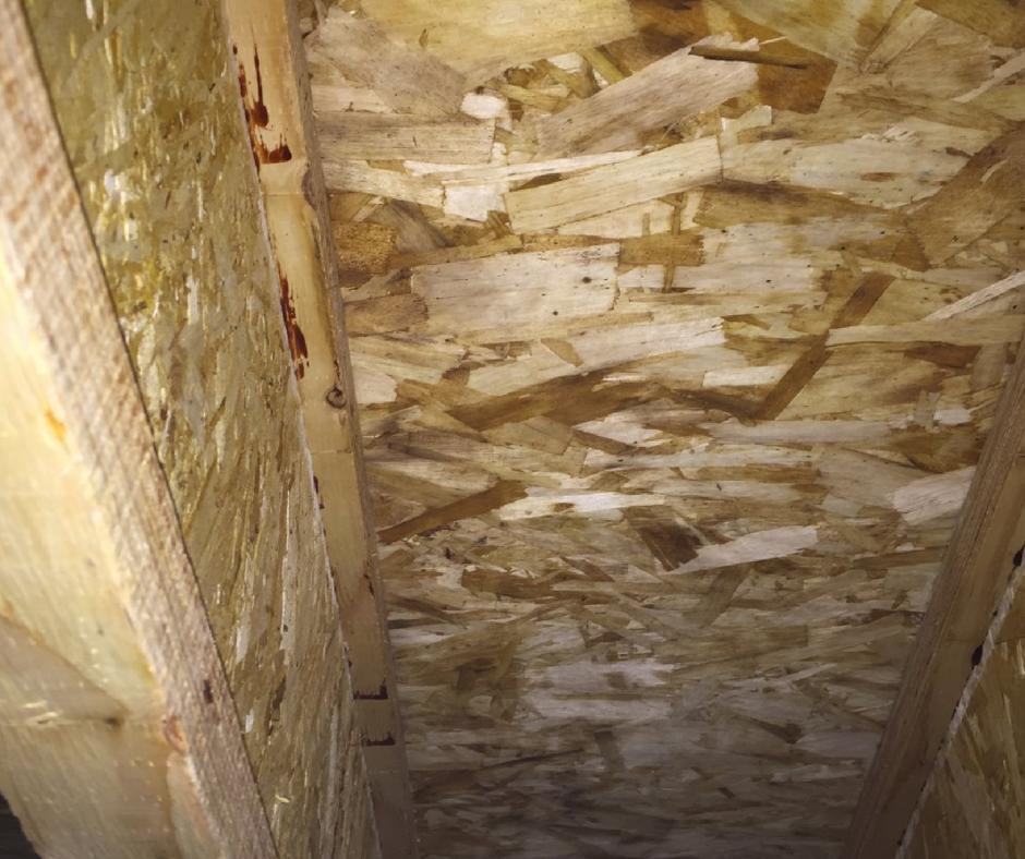 extensive mold remediation work