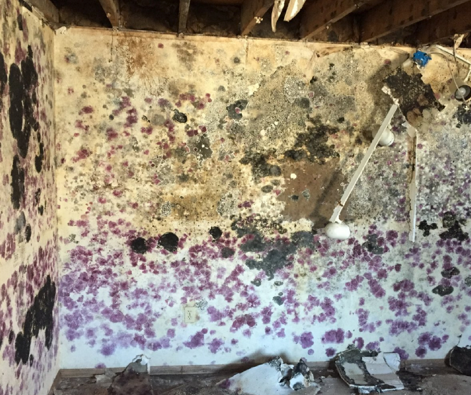water pipe leak causing mold growth