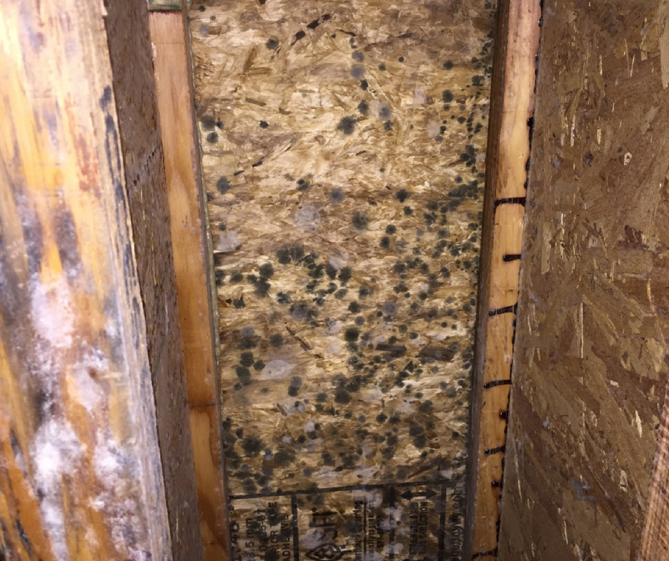 crawl space mold growth
