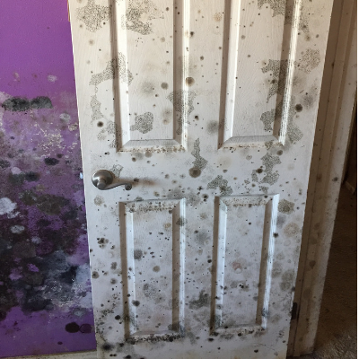 pure-air-solutions-mold-door.png