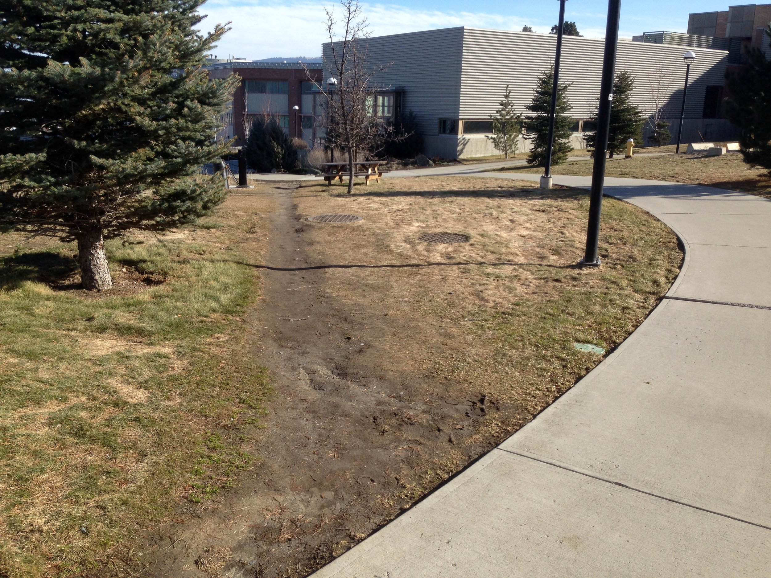 An example of damage which can occur to landscaping without appropriate planning for foot traffic.
