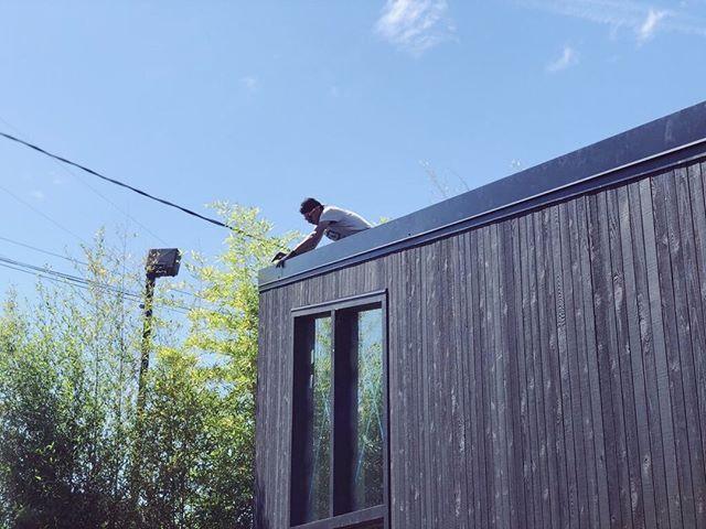 Roof line kisses bamboo.  Shed ADU  -- #metal #roof #windows #minimalist #carpentry #hardworkingman #glazing #customwindows #portland #adu #design #build #tinyhouse #livelarge #cedar #pacificnorthwest #architecture #contemporaryarchitecture  #woodframing #designbuild #custombuilder #roofing #minimalism #simplicity #pdx #pdxnow #pdxdesign #portlandarchitecture #dadu #keepcraftalive
