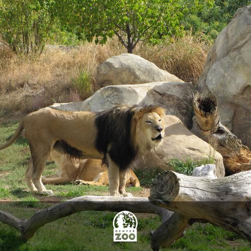 denver_zoo.jpg