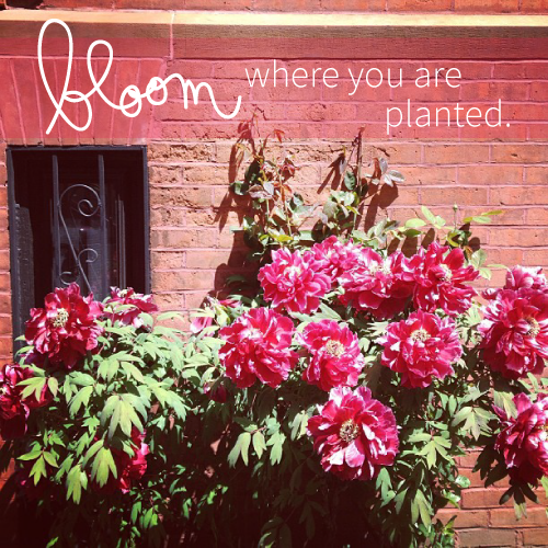bloom-where-you-are-planted.png