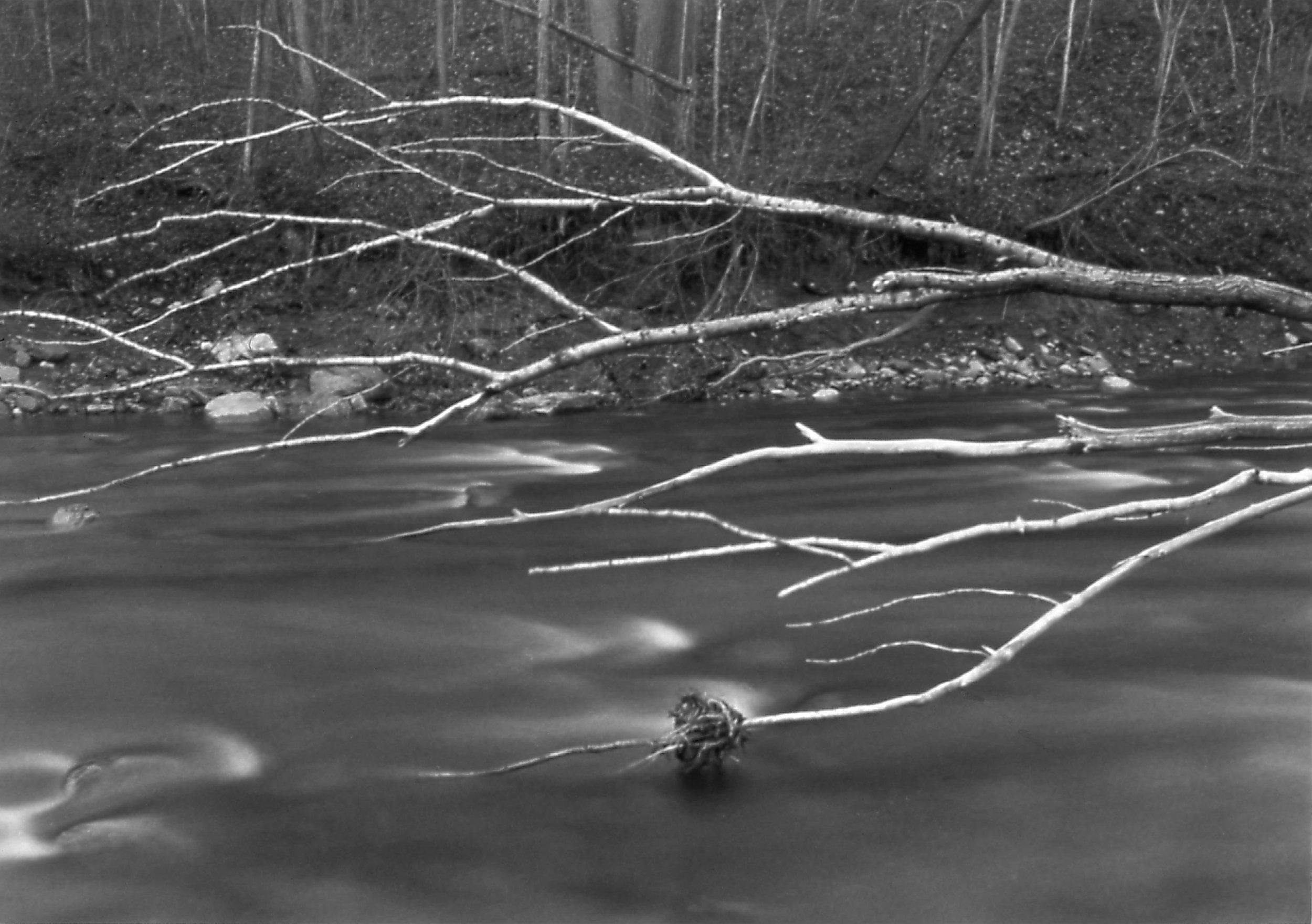 Salmon Creek Portfolio, III.jpg
