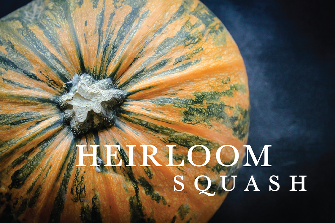 heirloomsquash.png