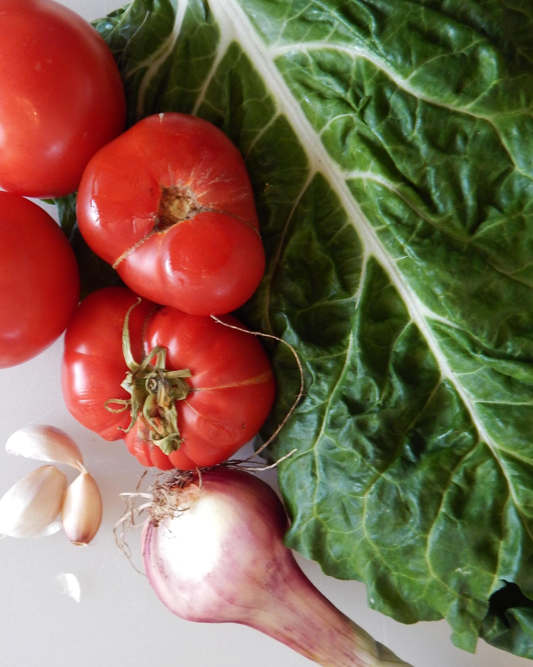 Tomatoe5_7_22.jpg
