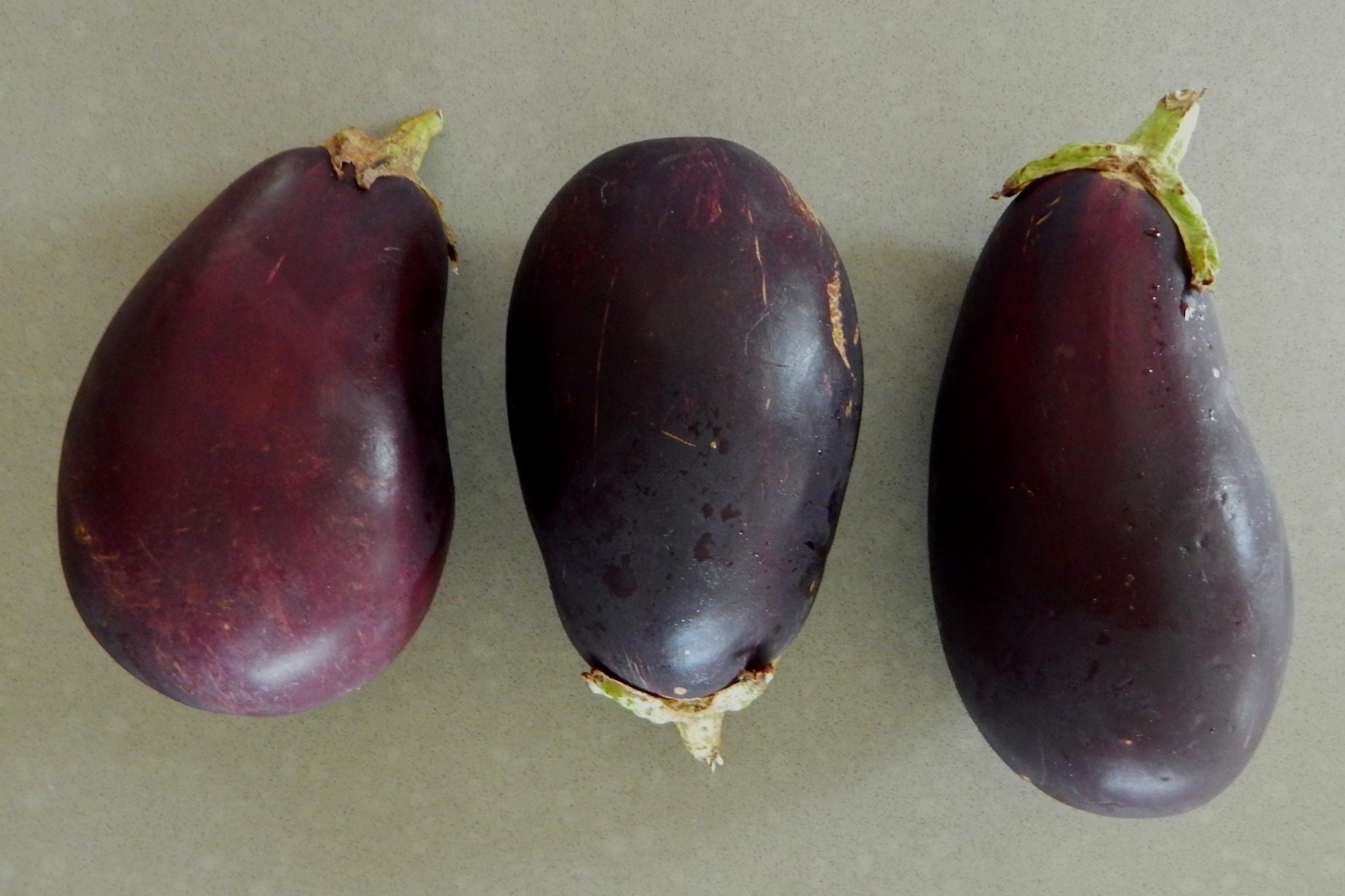 Eggplant2_8_5_19.jpg