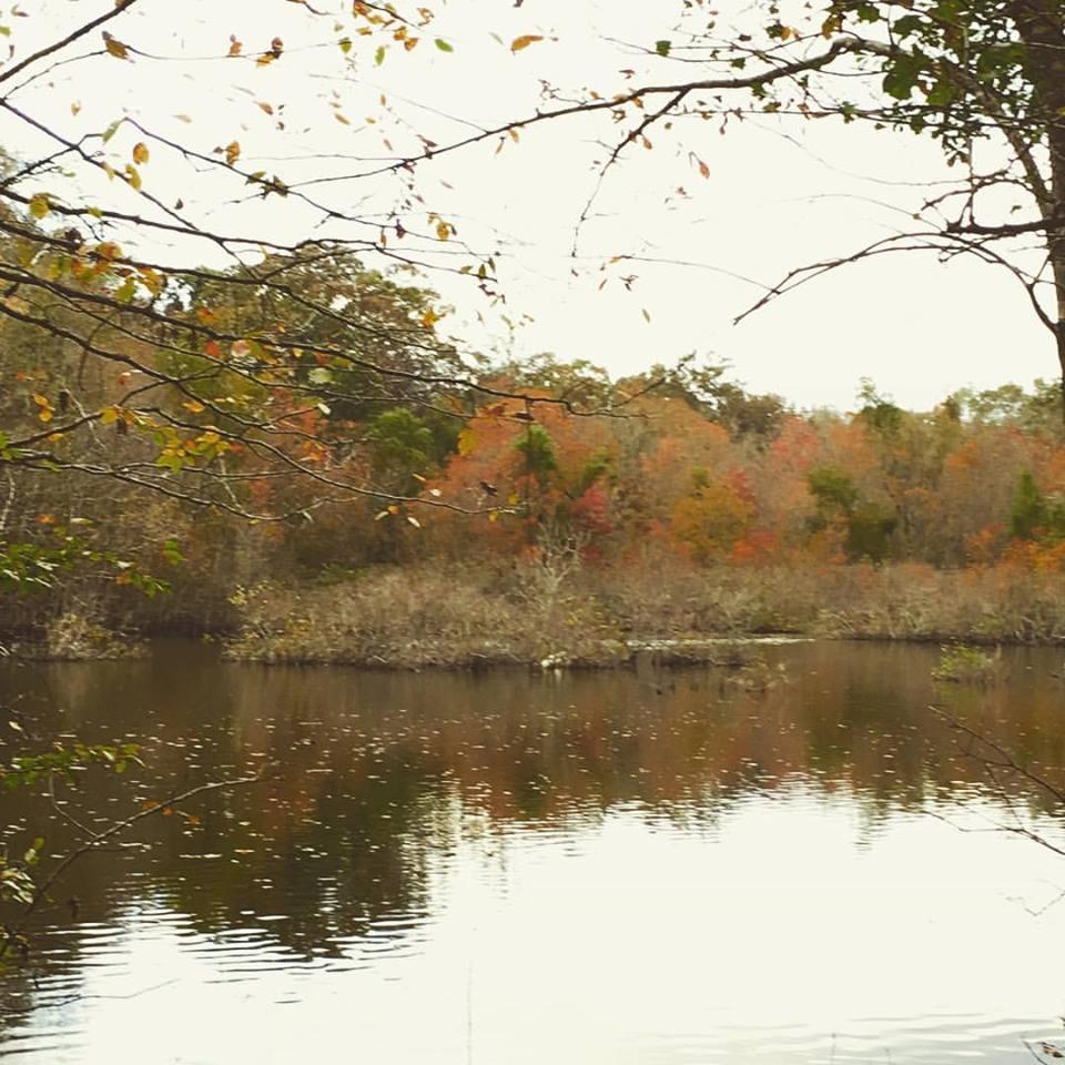 lake in the fall.jpg